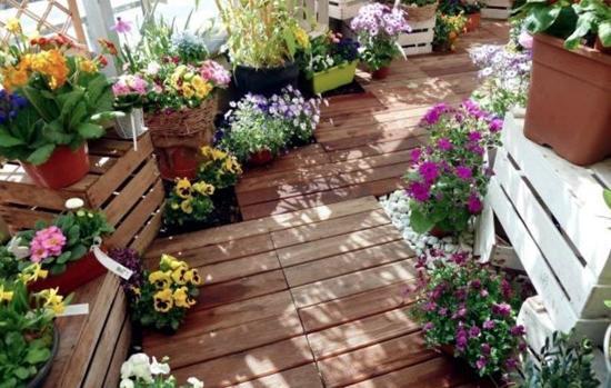 کدام گیاهان بالکنی در فصل گرم رشد بهتری دارند؟