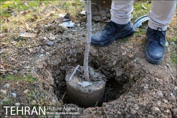 کاشت 2200 اصله نهال در بوستان چیتگر